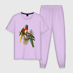 Пижама хлопковая мужская Тропические попугаи цвета лаванда — фото 1