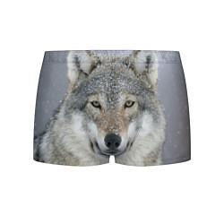 Трусы-боксеры мужские Милый волк цвета 3D-принт — фото 1